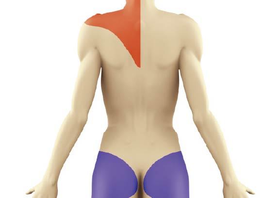 筋肉の状態を色分け